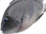 060917fish