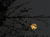 061104illumination