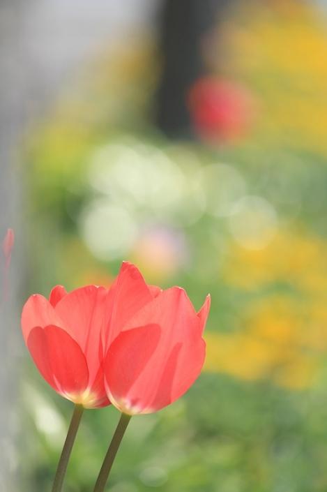 190403flower02