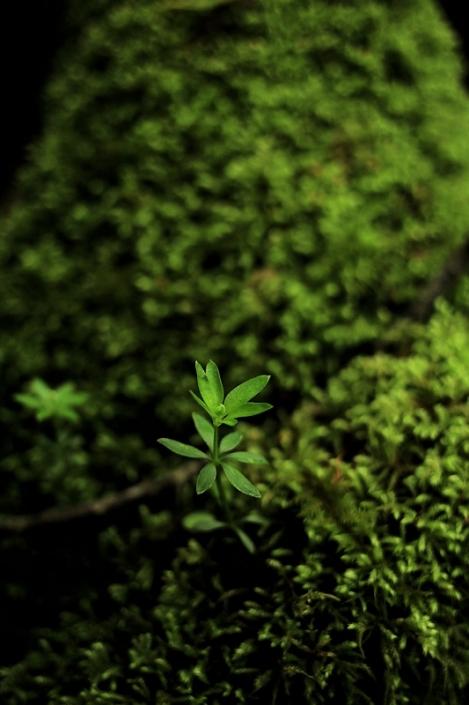 190501fresh_green03