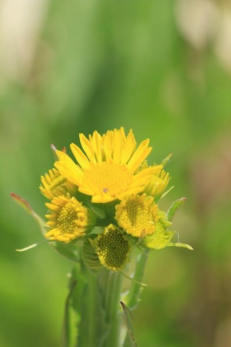 190503flowers02