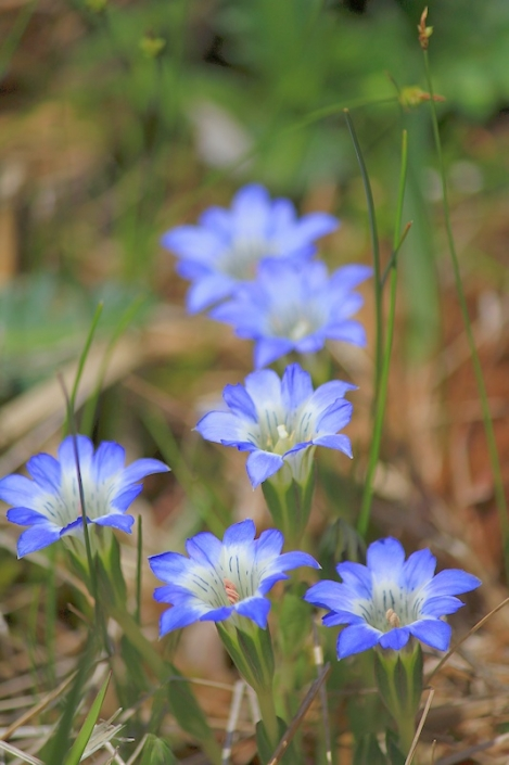 190503flowers03