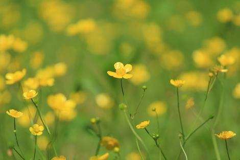 190503flowers04