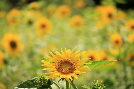 190623flowers03