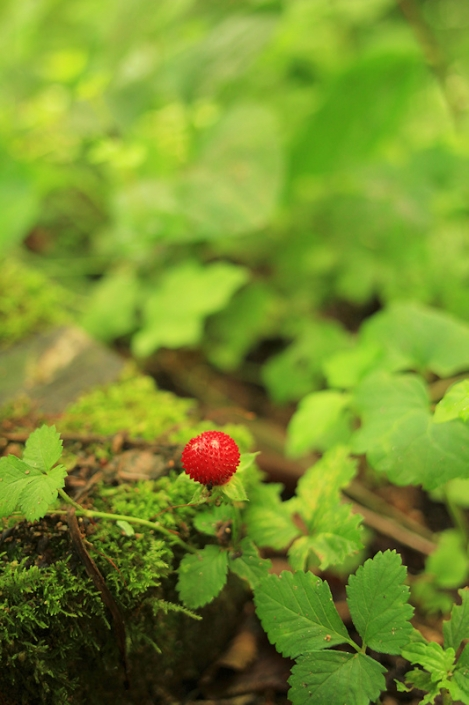 190728primeval_forest01