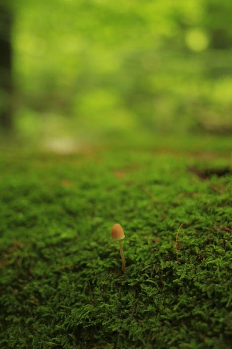 190728primeval_forest03