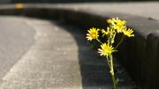 071204flowers