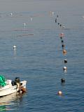 080106fishing