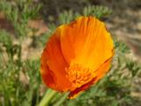 080429flower