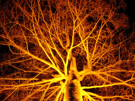081215illuminated