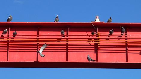 090104pigeons