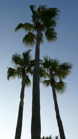 090920palm_tree