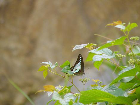 100716butterflies01