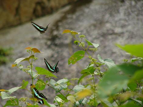 100716butterflies02