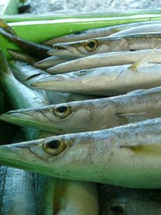 100922fishing_port02