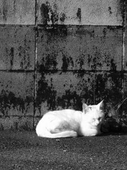 101103stray_cats02