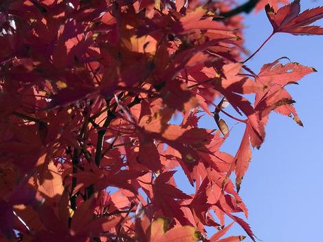 101130autumn_leaves01
