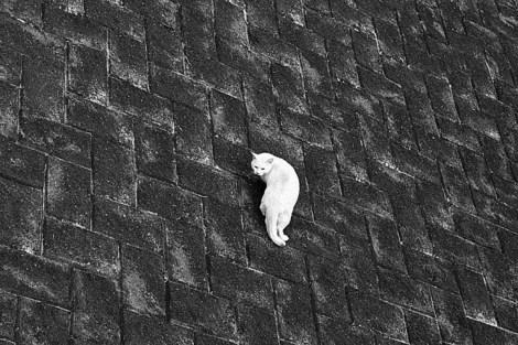 110102stray_cat01