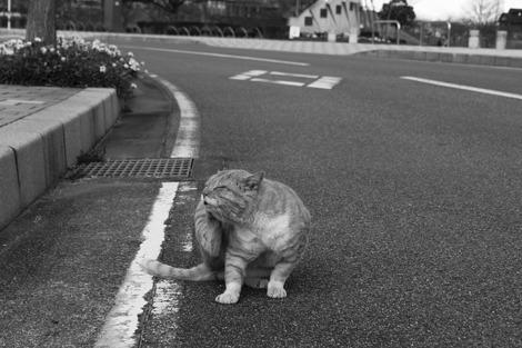 110102stray_cat02