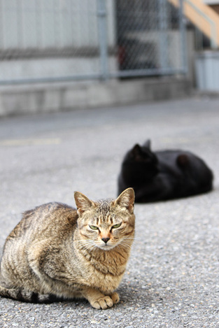 110417two_cats00