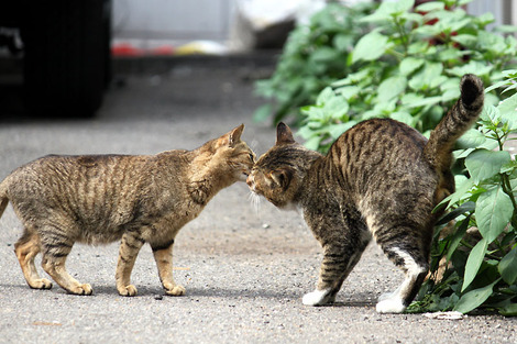 110417two_cats01