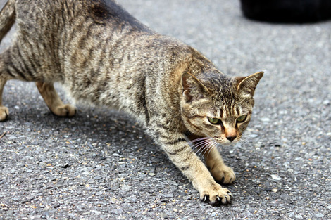 110417two_cats02