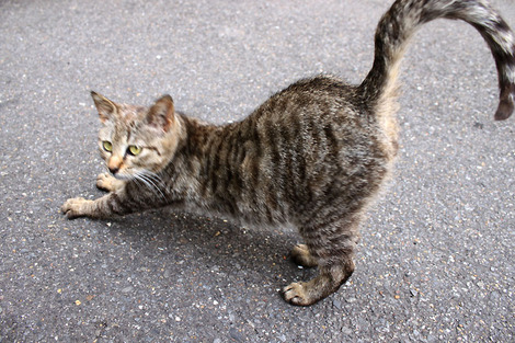 110417two_cats03