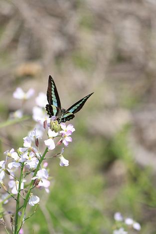 110505butterflies1