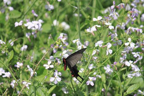 110505butterflies2