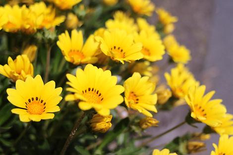 110521mayflower02