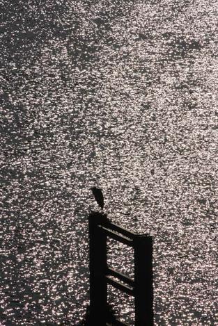 110925wild_birds3
