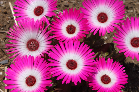 120505flowers3