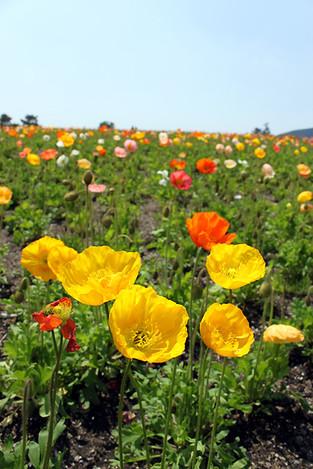 120505flowers4