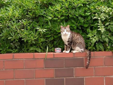 120609stray_cats1