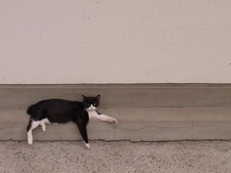 120609stray_cats2