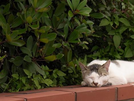 120609stray_cats3