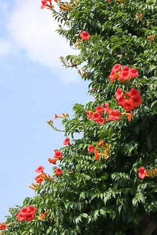 120728flowers01