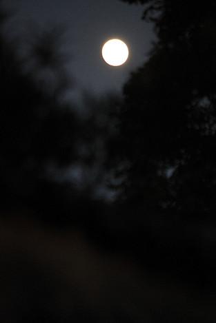 121028harvest_moon04