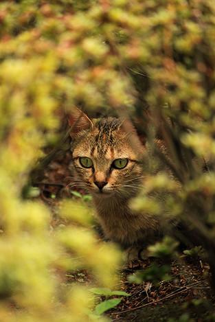 130908stray_cats02