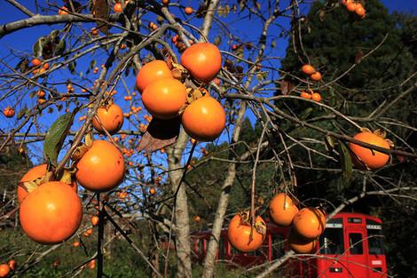 141103harvest_season04