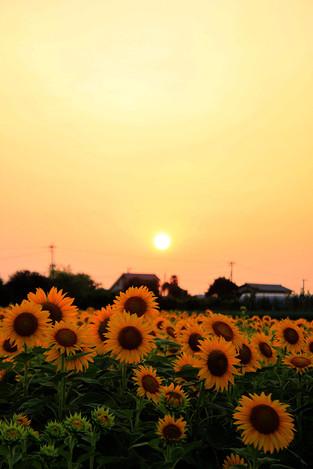 Summer_evening01