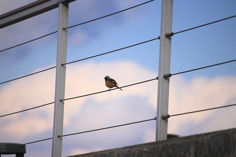 160125small_birds01
