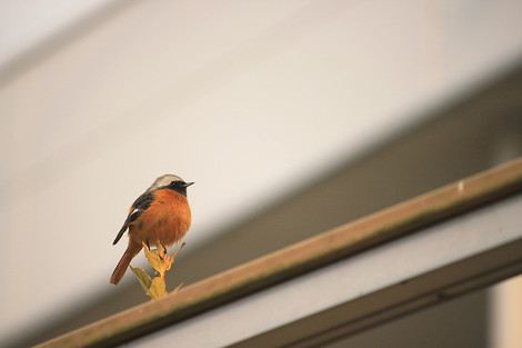 160125small_birds02