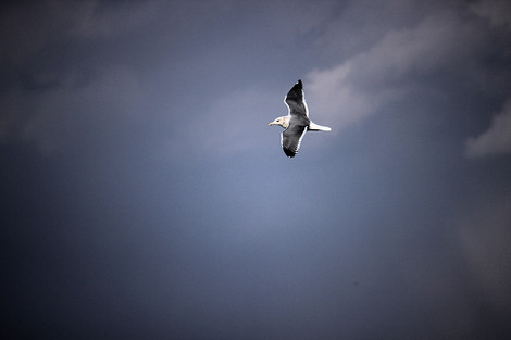 160125small_birds03