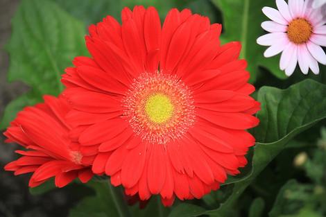 160409botanical_garden01