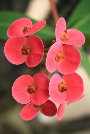 160409botanical_garden03