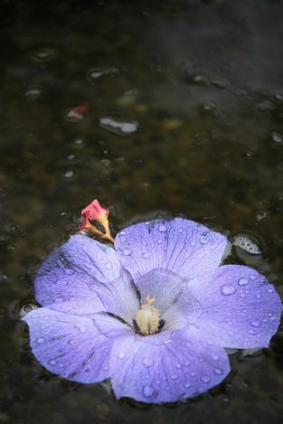 160409botanical_garden06