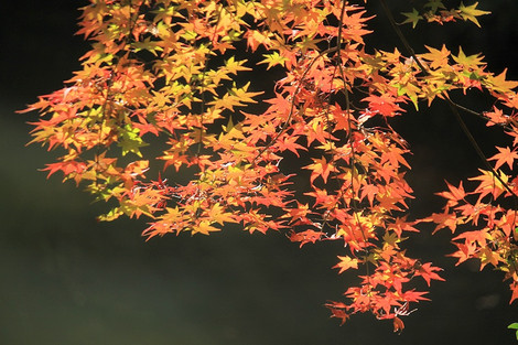 161120autumn_leaf02