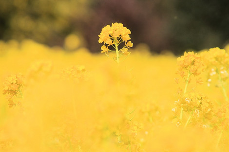 170304flower_garden01