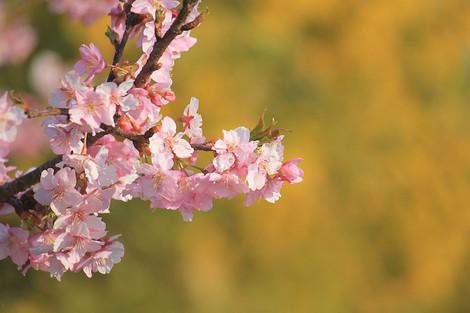 170304flower_garden03